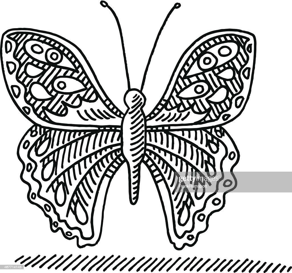 butterfly drawing vector art getty images