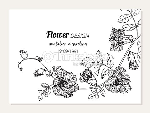 Butterfly Pea Flower Frame Drawing Illustration For Invitation And ...