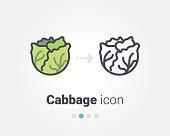Cabbage vector icon