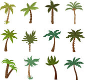 California palm trees. Summer tropical plant vector set. Green palm tropical exotic illustration of collection