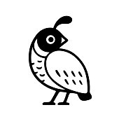 California quail drawing. Simple black and white logo design. Isolated vector bird illustration.