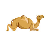 Camel lying. Vector illustration isolated on the white background
