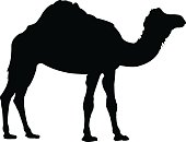 vector illustration of camel silhouette