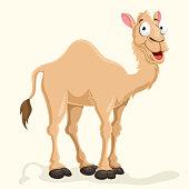 Camel Vector Illustration