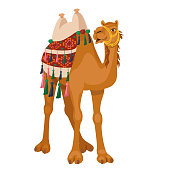 Camel with traditional colorful decorated bridle and saddle.