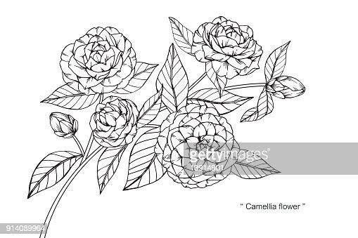 Fleur De Camelia De Dessin Clipart Vectoriel Thinkstock