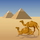 Camels in desert with egyptian pyramids. Vector illustration