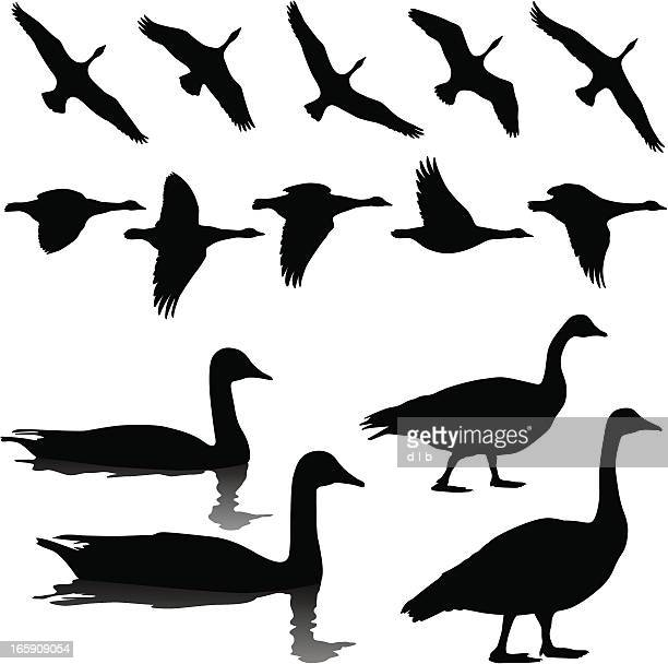 Animal Migration Stock Illustrations And Cartoons | Getty ...