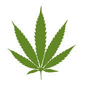Cannabis leaf green isolated white background vector illustration