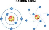 This vector diagram shows the protons, neutrons, and electrons of a carbon atom. Each is in a group of six. That makes the atom very stable. This type of model is now widely considered a sound basic v