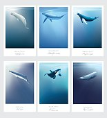 Card templates with whales swimming under the blue ocean surface vector illustrations. Beluga, Orca, Blue whale, Sperm whale, Minke, Humpback marine mammals