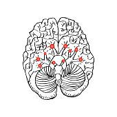 Carnial Nerves