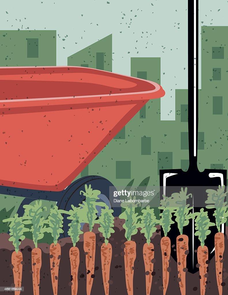 Vegetable garden rows - Carrots Growing In Vegetable Garden Rows With Wheelbarrow And Shovel Vector Art