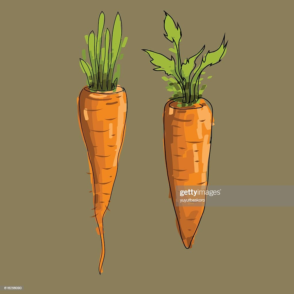 carrots vector illustration : Arte vetorial