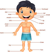 Vector illustration of Cartoon Boy Vocabulary part of body