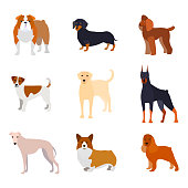 Cartoon Breed of Dogs Collection Icons Include of Doberman, Bulldog, Labrador or Retriever, Poodle and Corgi. Vector illustration