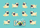 Cartoon character pug dog poses. Cute Pet dog in the flat style.