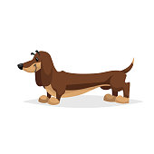 Cartoon dachshund dog standing. Simple gradient purebred vector illustration. Comic dog character. Pet animal isolated on white background. EPS10 + JPEG preview.