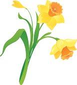 Vector cartoon daffodil.