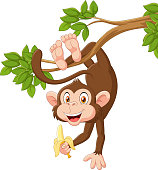 Illustration of Cartoon happy monkey hanging and holding banana