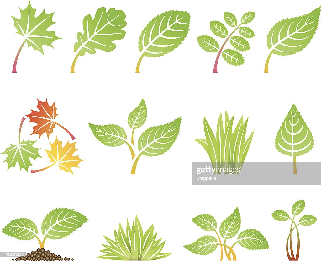 cartoon icons depicting various types of leaves vector art getty