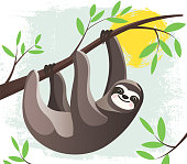 Cartoon lazy Hanging Sloth in a rain forest