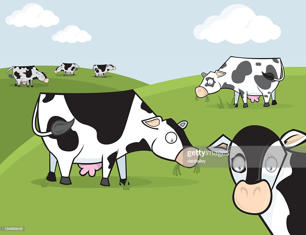 cartoon of black and white cows grazing in a paddock vector art