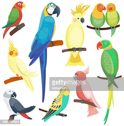 Cartoon parrots set vector : stock vector
