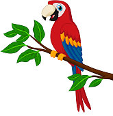 Vector illustration of Cartoon red parrot on a branch