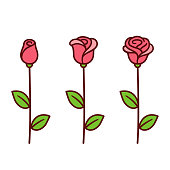 Cartoon style red rose icon set. Three stages of blooming, bud opening into beautiful flower. Hand drawn isolated vector clip art illustration.