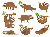 Cartoon sloths family. Adorable sloth sleepy animal at jungle rainforest different lazy sleeping. Funny brown cute animals happy sleep on tropical forest trees vector icons isolated set