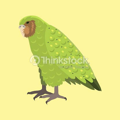 Cartoon tropical kakapo parrot wild animal bird vector illustration wildlife feather zoo color nature vivid