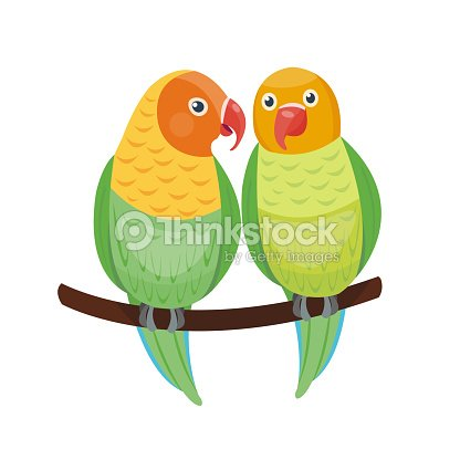 Cartoon tropical lovebird parrot wild animal bird vector illustration wildlife zoo couple nature vivid