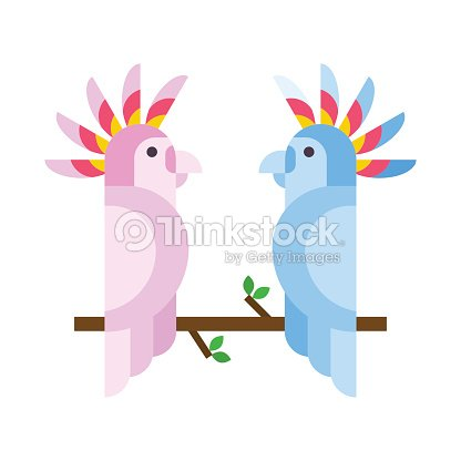 Cartoon tropical parrot wild animal bird vector illustration and wildlife cute feather zoo color nature vivid perch tropics fly couple jungle pretty macaw