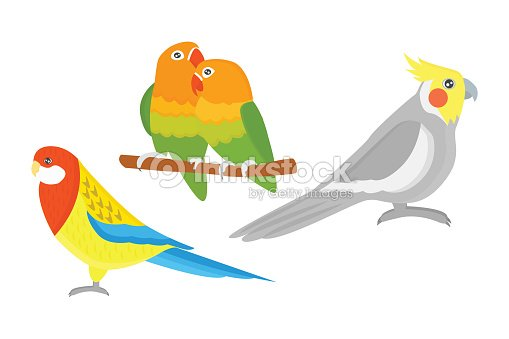 Cartoon tropical parrot wild animal bird vector illustration