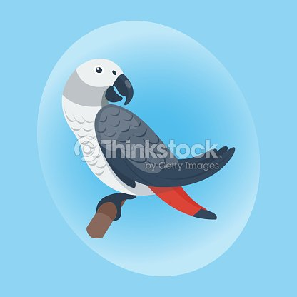 Cartoon tropical parrot wild animal bird vector illustration wildlife feather zoo color nature vivid