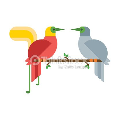 Cartoon tropical peacock couple wild animal bird vector illustration and wildlife cute feather zoo color nature vivid perch tropics fly jungle pretty tail