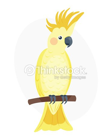Cartoon tropical yellow parrot wild animal bird vector illustration wildlife feather zoo color nature vivid
