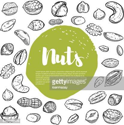 Cashew, hazelnut, walnut, pistachio, pecan nuts. Nuts sketches . : stock vector