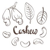 Cashew, kernels and leaves. Vector illustration