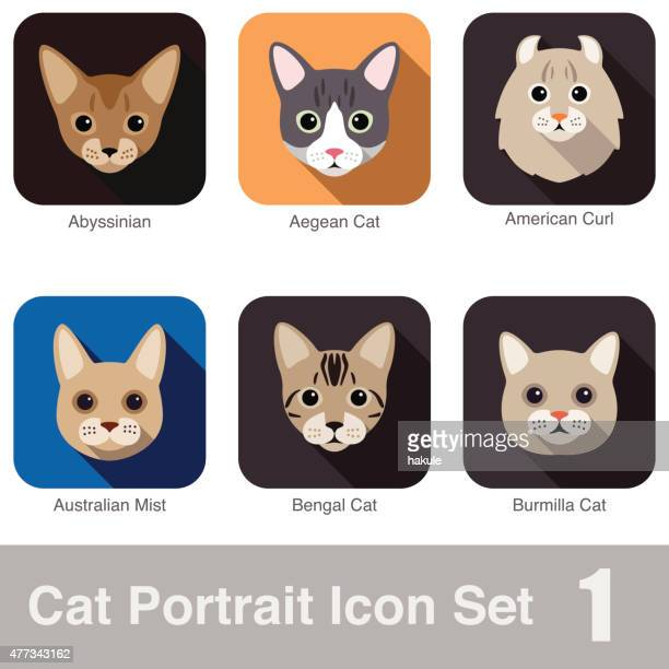 Cat breed face cartoon flat icon series