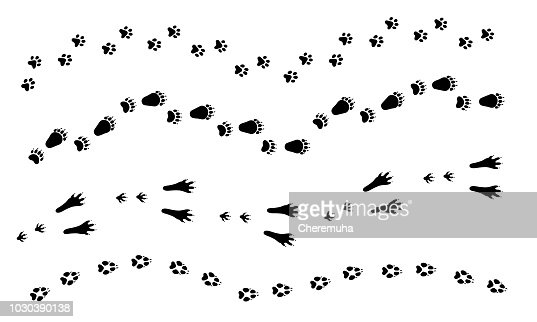 Cat, dog, wolf, rabbit, bear foot print. Paw set, animal tracks. : stock vector