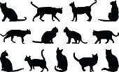 vector illustration of cats silhouette