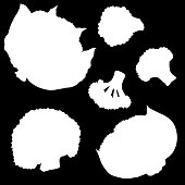 Cauliflower, vegetable, vector