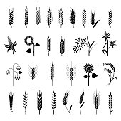 Cereals icon set with rice, wheat, corn, oats, rye, barley. Ears of wheat bread symbols. Organic , agriculture seed, plant and food natural eat