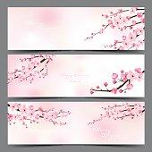 cherry blossom realistic vector, sakura, japan, blur background.
