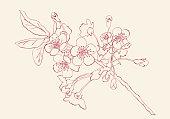 Hand drawn cherry blossom arrangement. Floral decorative design elements. Vector Illustration.Eps 10.