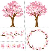 Cherry Blossoms for Design Elements.