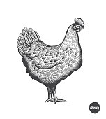 Chicken hand drawn illustration in engraving or woodcut style. Hen meat and eggs vintage produce elements. Badges and design elements for the chicken manufacturing. Vector illustration