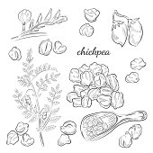Peas, pods and blooming sketches. Scoop for chickpeas isolated on white background.